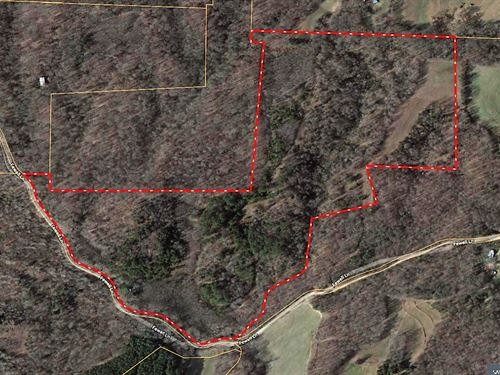 West TN Hunting Land Live Stream : Lavinia : Carroll County : Tennessee