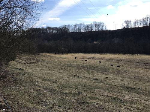 25 Acres Rolling Pasture, Pall : Pall Mall : Pickett County : Tennessee