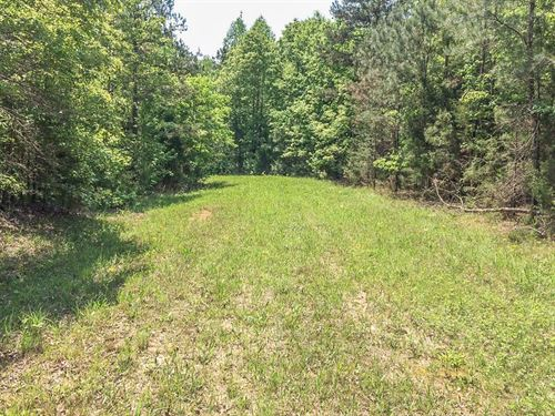 Beautiful Tract Land 44 Acres : Ramer : McNairy County : Tennessee