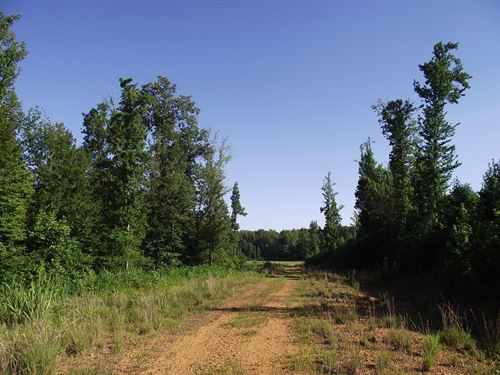 Tennessee Land Hunting Development : Selmer : McNairy County : Tennessee