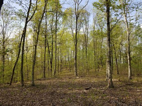 South Tennessee Timber Land Creek : Waynesboro : Wayne County : Tennessee
