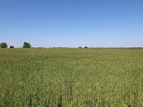 Equine Farm & Ranch Land Blossom : Blossom : Lamar County : Texas
