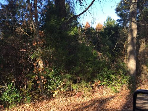 Land For Sale in East Texas : Laneville : Cherokee County : Texas