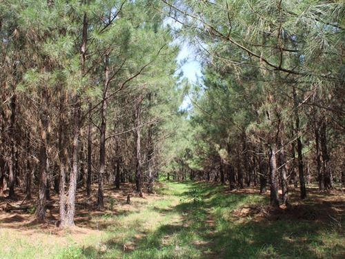 Rural Land Stream Pond Palestine : Palestine : Anderson County : Texas