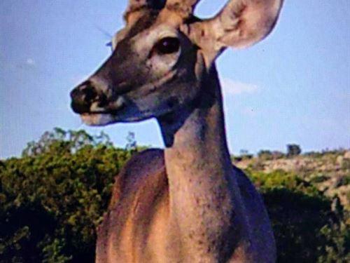 Hunting Property Rv & Storage : Ozona : Crockett County : Texas