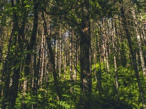 Wooded Acreage in Draper, VA : Draper : Pulaski County : Virginia
