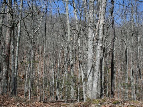 Wooded Acreage Mustoe Area Highland : Monterey : Highland County : Virginia