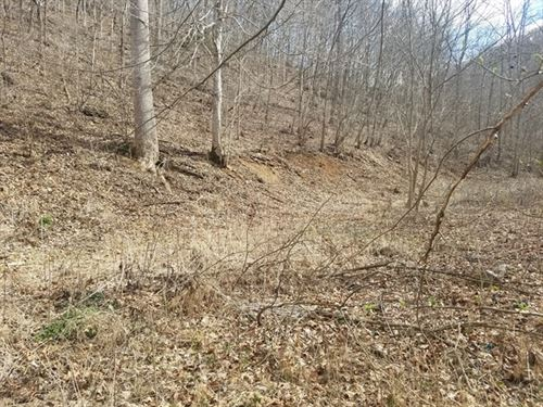 Affordable, Private Hunting Land : North Tazewell : Tazewell County : Virginia