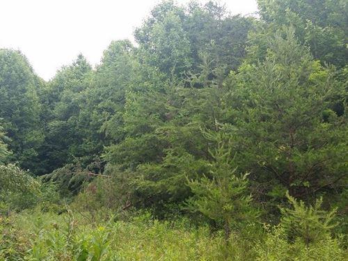 Mountain Hunting Recreational : Stuart : Patrick County : Virginia
