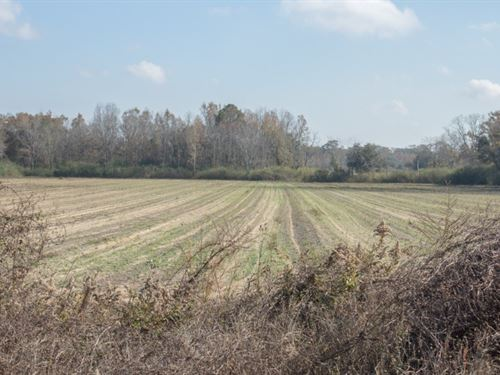 115 Acres Located South Slocomb : Slocomb : Geneva County : Alabama