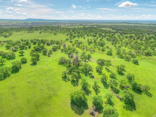 Sprawling 560 Acre Country Estate : Oroville : Butte County : California