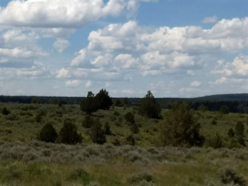 Land in Northern California : Alturas : Modoc County : California