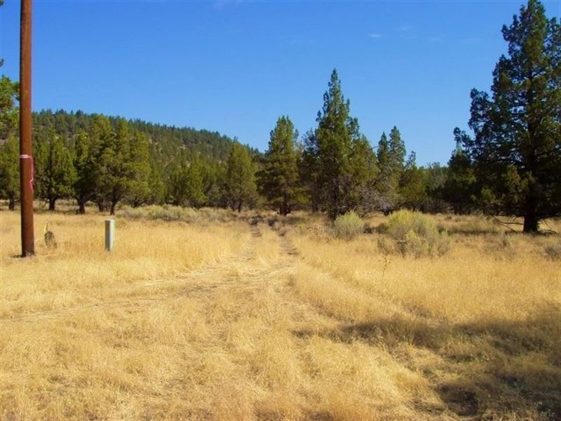 Modoc County Acreage With Well : Canby : Modoc County : California