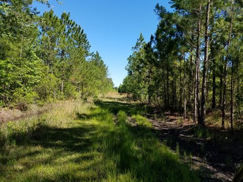 134 Undeveloped Acres Pembroke : Pembroke : Bryan County : Georgia