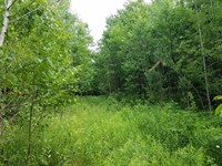 Attention Hunters.64 Acres To Build : Eckerman : Chippewa County : Michigan