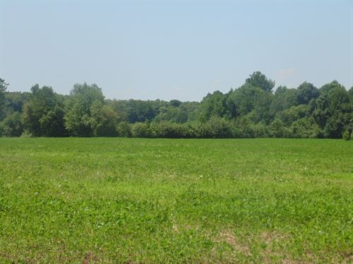 Prime Farmland, Ahoskie, North : Ahoskie : Hertford County : North Carolina