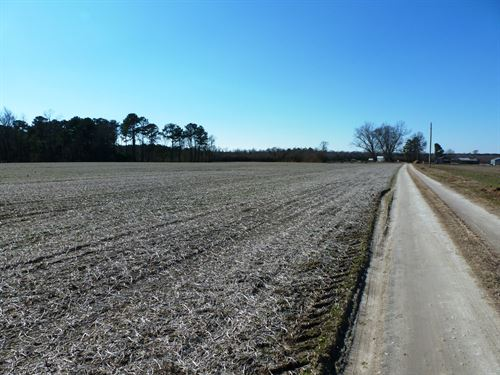 Crop Farm, Hunter's Paradise : Beulaville : Duplin County : North Carolina