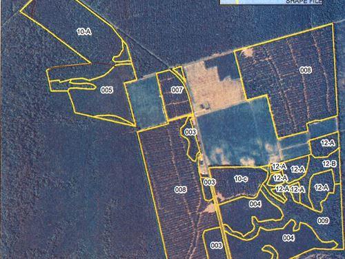 Timber Investment & Recreational : Edenton : Chowan County : North Carolina