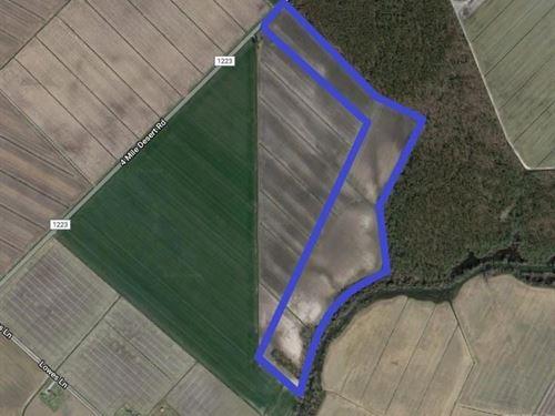Great Farm Land For Sale : Hertford : Chowan County : North Carolina