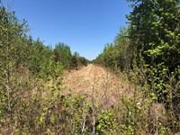 Timber Tract Pamlico Co, NC : Merritt : Pamlico County : North Carolina
