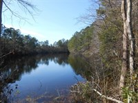 Washington County, NC Hunting Tract : Plymouth : Washington County : North Carolina