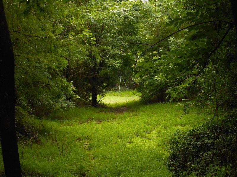 Waterfront Hunting Property North : Tarboro : Edgecombe County : North Carolina