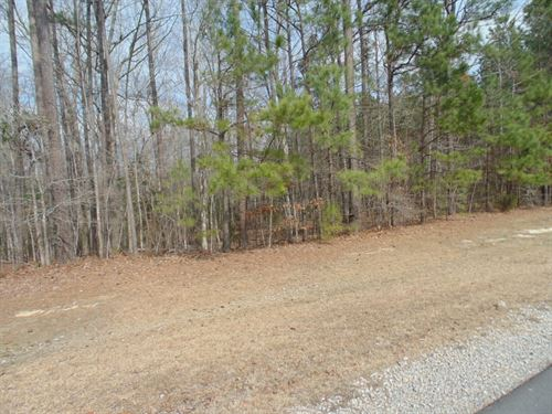 Wooded Acreage, Winton, North : Winton : Hertford County : North Carolina
