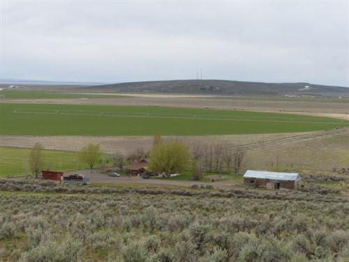 Crane, Nice Ranch Crane-Buchanan : Crane : Harney County : Oregon