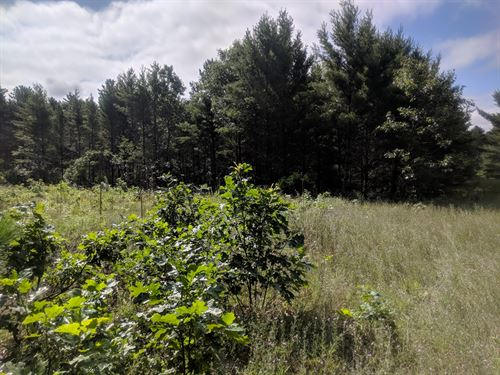 Wooded Land For Sale Almond, WI : Almond : Portage County : Wisconsin