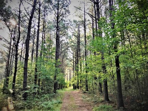 48.76 Acres Hunting Timber Land : Pelahatchie : Rankin County : Mississippi