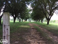 Waterfront Home Sites,Pasture & Ti : Terry : Hinds County : Mississippi