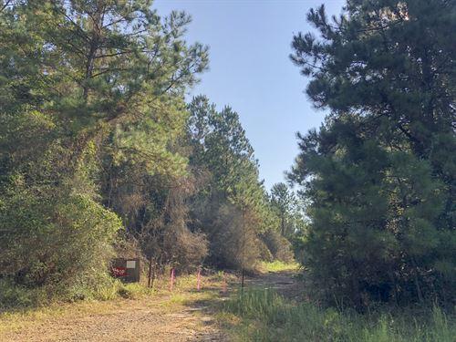 170 Acres Dickson East : Livinston : Polk County : Texas