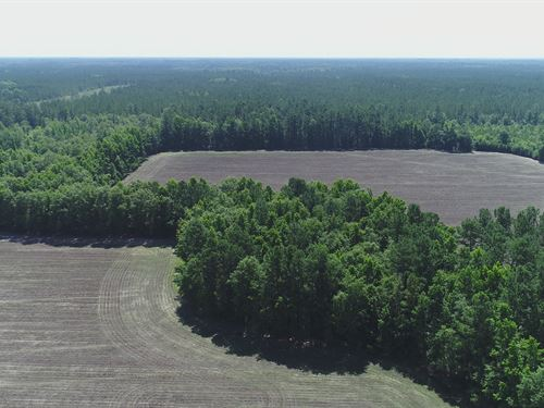 Hiotts Pond Rd : Walterboro : Colleton County : South Carolina