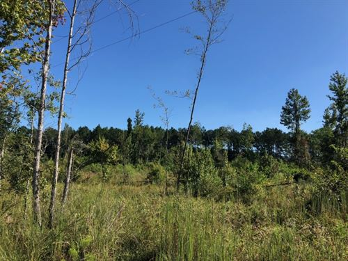 63 Acres Pugh Road / Enon, La : Enon : Washington Parish : Louisiana