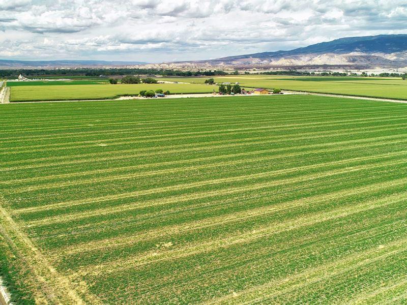 Southwest Irrigated Farmland Delta Delta County Colorado