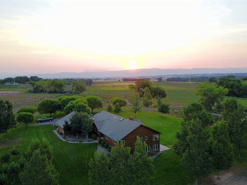 Custom Home & Vineyard 14.4 Acres : Olathe : Montrose County : Colorado
