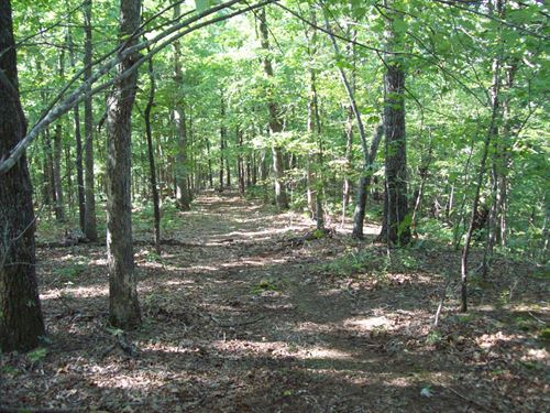 40 Acres Timber Property : Piedmont : Wayne County : Missouri