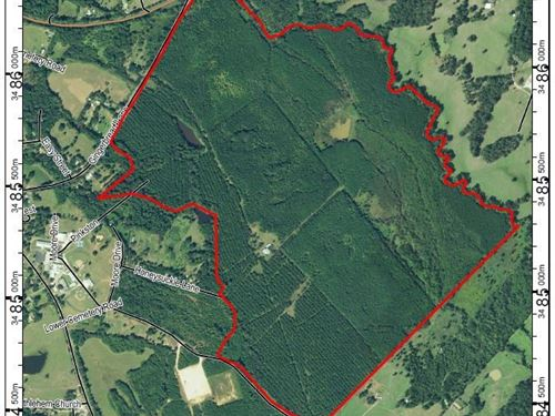 501 Acres Timber Hunting Recreation : Chireno : Nacogdoches County : Texas