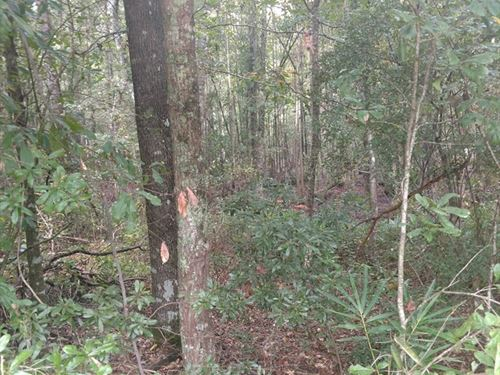 Land For Sale in Houston County : Cottonwood : Houston County : Alabama
