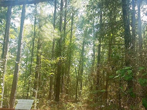 15 Acre Timber Land Kiamichi : Moyers : Pushmataha County : Oklahoma