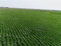 496 Acres in Sanborn County SD : Brookings : Sanborn County : South Dakota
