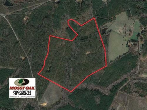 109 Acres of Recreational Hunting : Dolphin : Brunswick County : Virginia