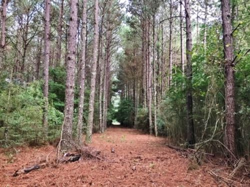 160 Acre Hunting Land Tract For Sal : Prentiss : Jefferson Davis County : Mississippi