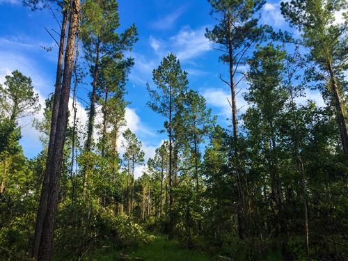 Carroll Tract North : Ridgeville : Dorchester County : South Carolina