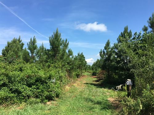 26 Acre Hunting Tract : Cedartown : Polk County : Georgia
