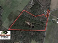 16 Acres of Hunting Land For Sale : Miona : Accomack County : Virginia