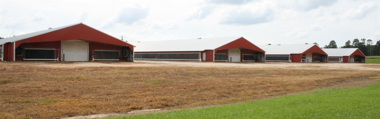 Poultry Farm With 4 Mega Houses : Roanoke : Randolph County : Alabama