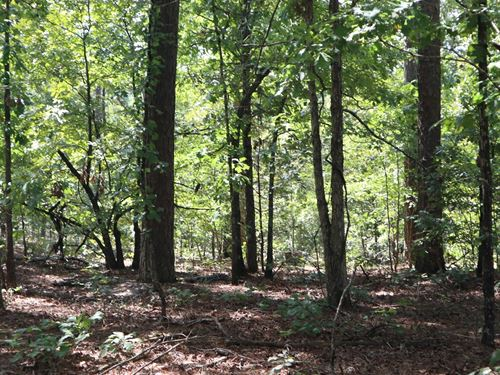 Ozarks Private Hunting Property : Salem : Fulton County : Arkansas