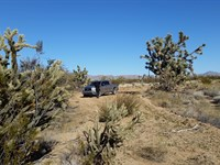 80 Acres, Stagecoach Trails, Yucca : Yucca : Mohave County : Arizona