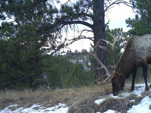 Elk Meadows In The Pine Ridge : Chadron : Dawes County : Nebraska